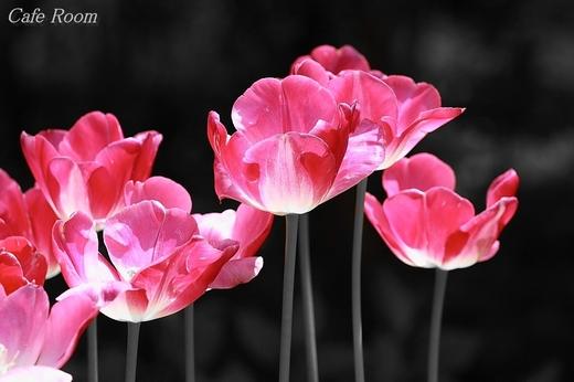 L_pink